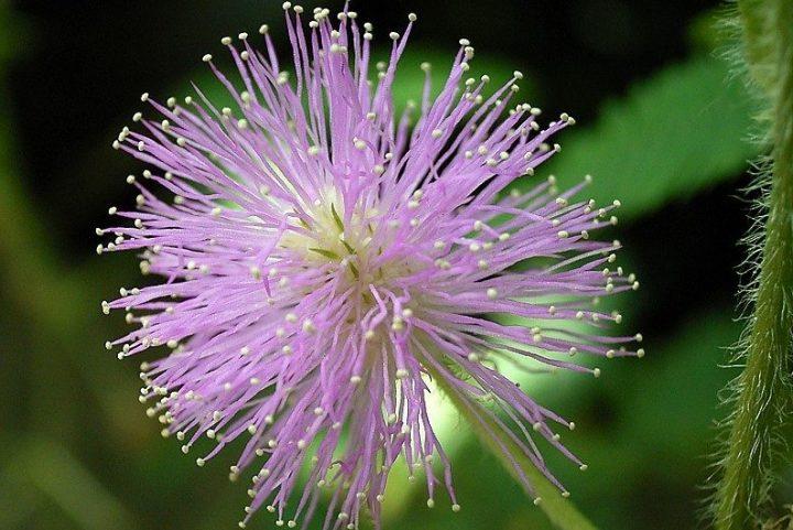 [Resenha] Pensando como uma flor