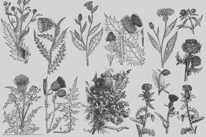 [Conteúdo] Glossário de botânica