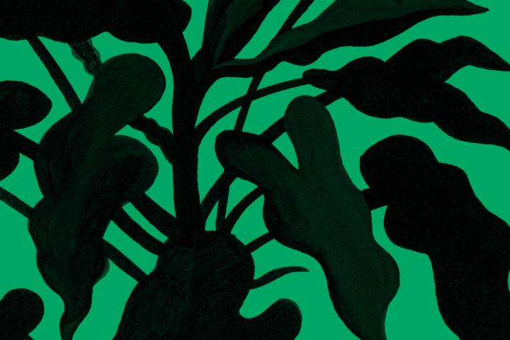[Trecho do livro] Revolução das Plantas