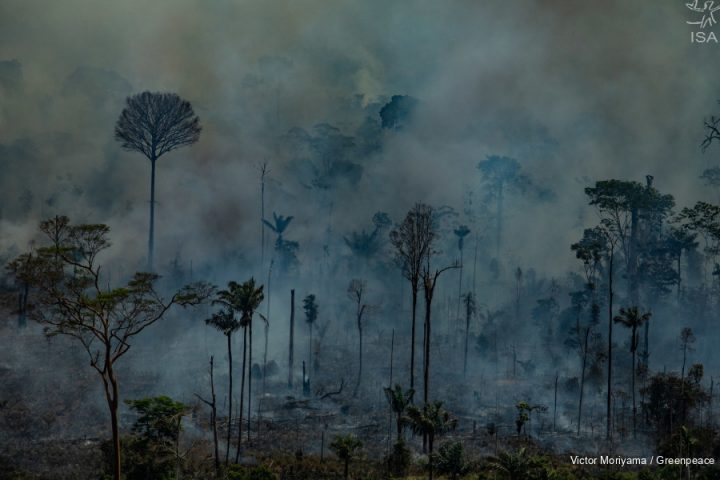 [Conteúdo] Na Amazônia, a floresta está à venda