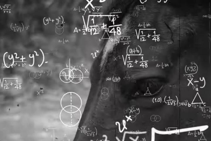 [Conteúdo] A fama do cavalo matemático